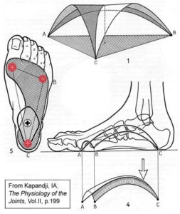 foot arch diagram