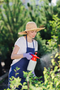 Woman spraying garden